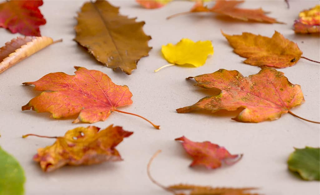 Fall leaves in assorted colors sit on a counter.