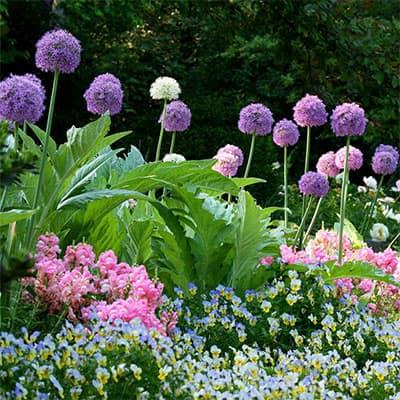 5 Favorite Fall-Planted Flower Bulbs