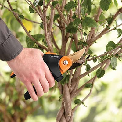 5 Secrets to Proper Pruning