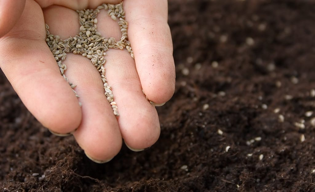 Gardener sowing seeds in soil.