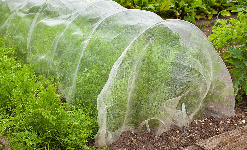 Row cover on green vegetable crop.