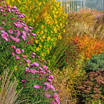 5 Tricks to Boost Fall-Planted Perennials