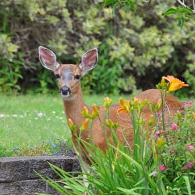 5 Ways to Protect Your Garden from Pests