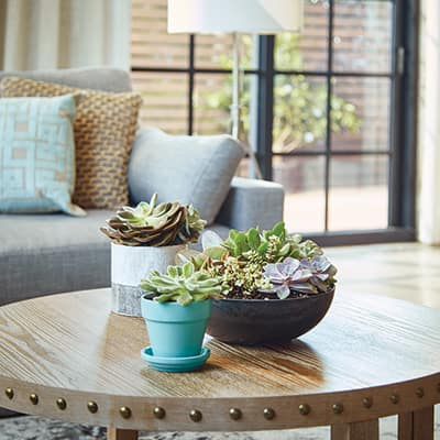 5 Ways to Decorate Your Space With Houseplants in Mind