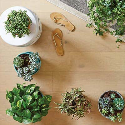 6 Easy and On-Trend Vines You Can Grow Indoors