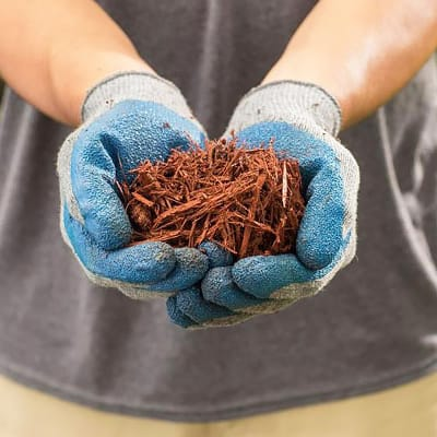 6 Things to Know About Mulch