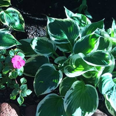 Divide These 5 Perennials Now
