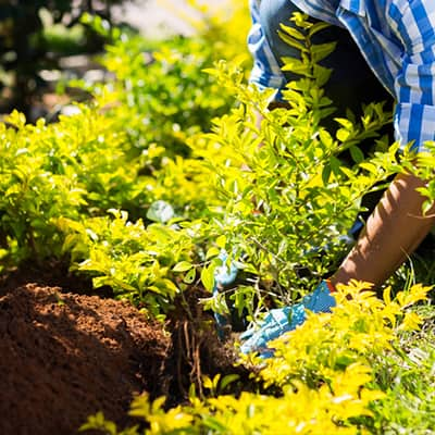 Fall Is the Best Time to Plant Trees and Shrubs