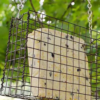 Make a Suet Bird Feeder