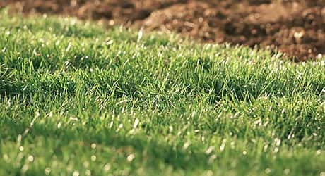 Test Your Turf - Lawn Watering Tips Techniques
