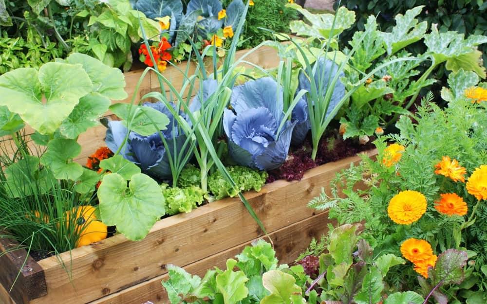Vegetables growing in a summer garden.