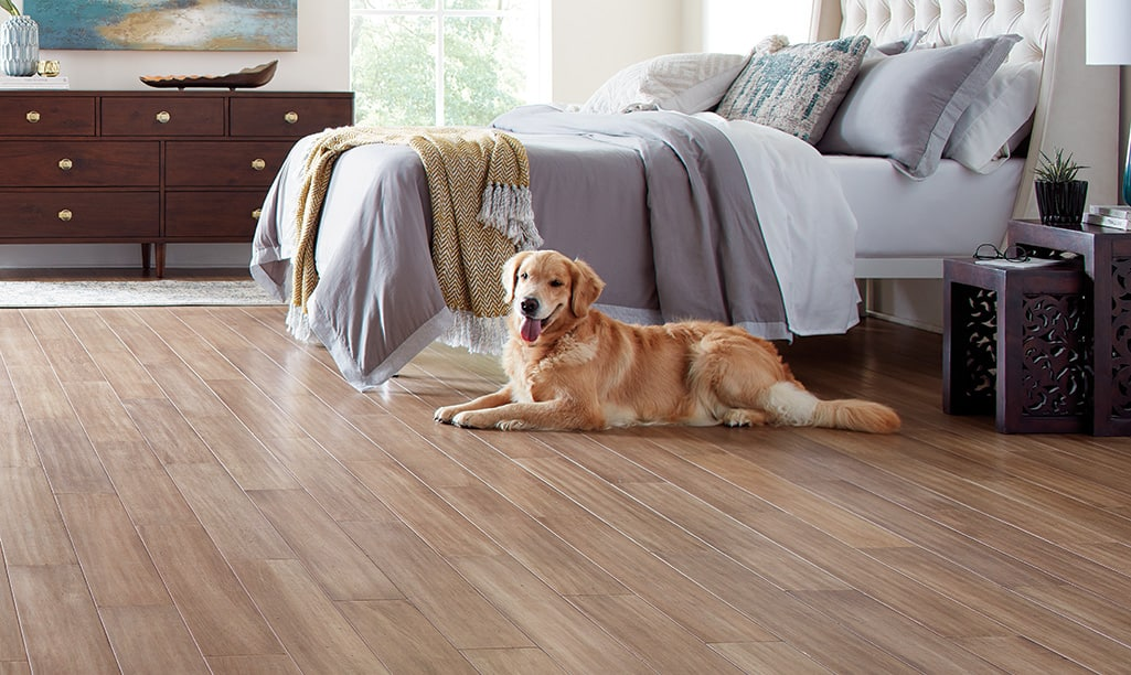 Best Flooring For Dogs, Laminate Flooring And Dogs