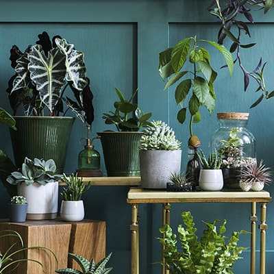 A variety of foliage plants in white and green pots.