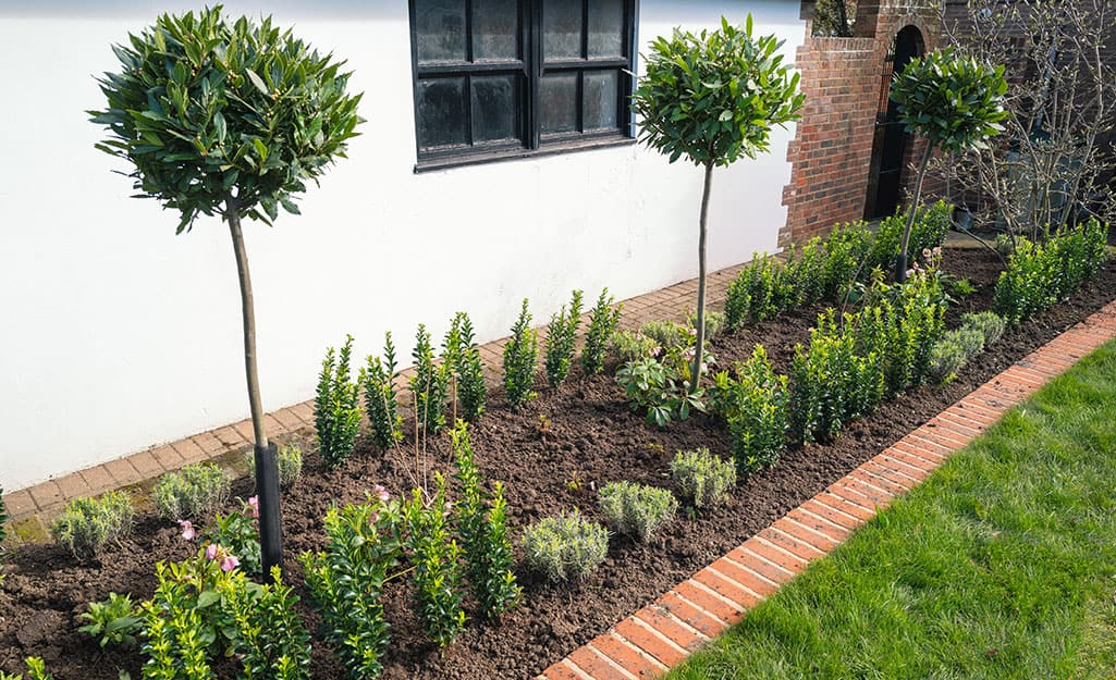 Brick edging installed between a flower bed and lawn.