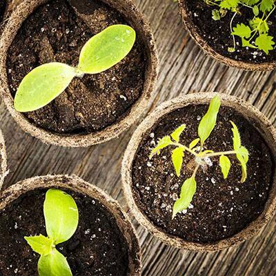Best Lights for Stronger Seedlings