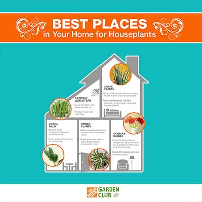 Best Places in Your Home for Houseplants