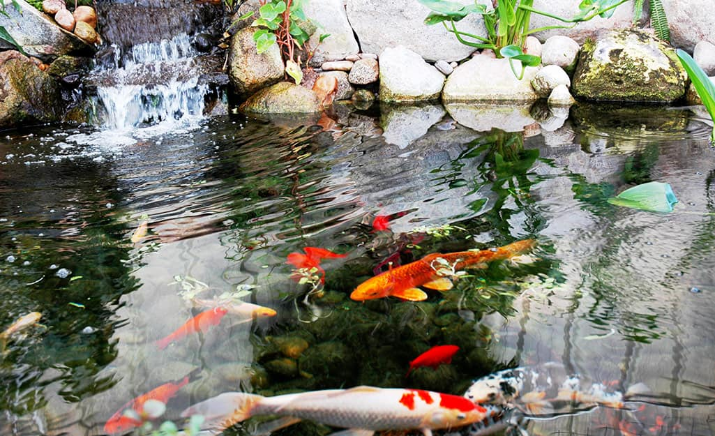 Best Pond Pumps For Your Garden - The Home Depot