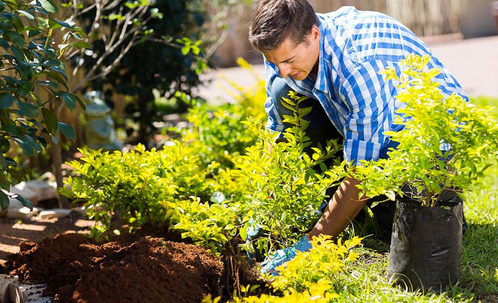 A man planting shrubs in a landscape.
