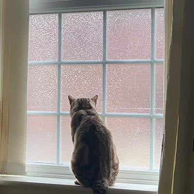 A cat sitting in a window covered with frosted window film.