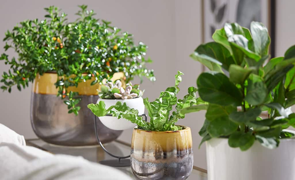 Houseplants in containers