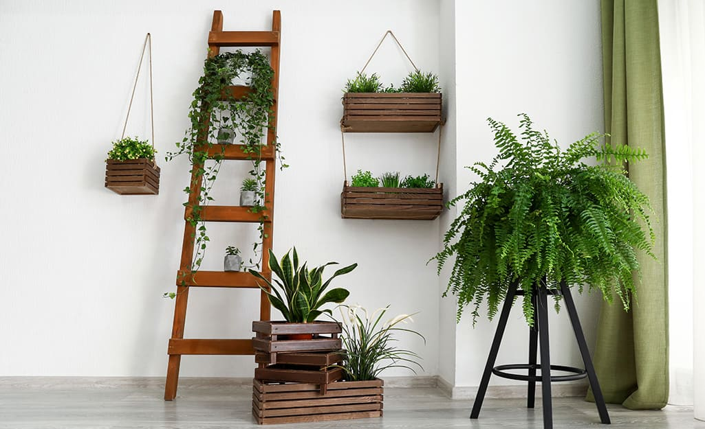 Shelves filled with houseplants