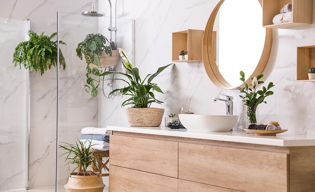A bathroom filled with houseplants