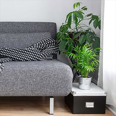 Clean and Purify Air with Houseplants