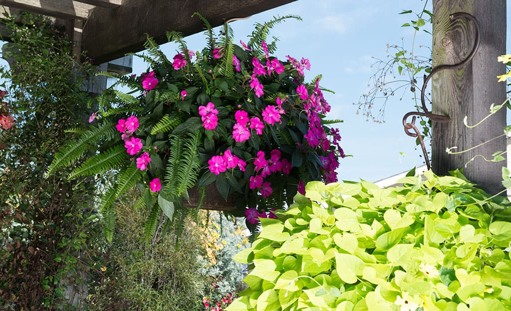 A basket with ferns and pink flowers