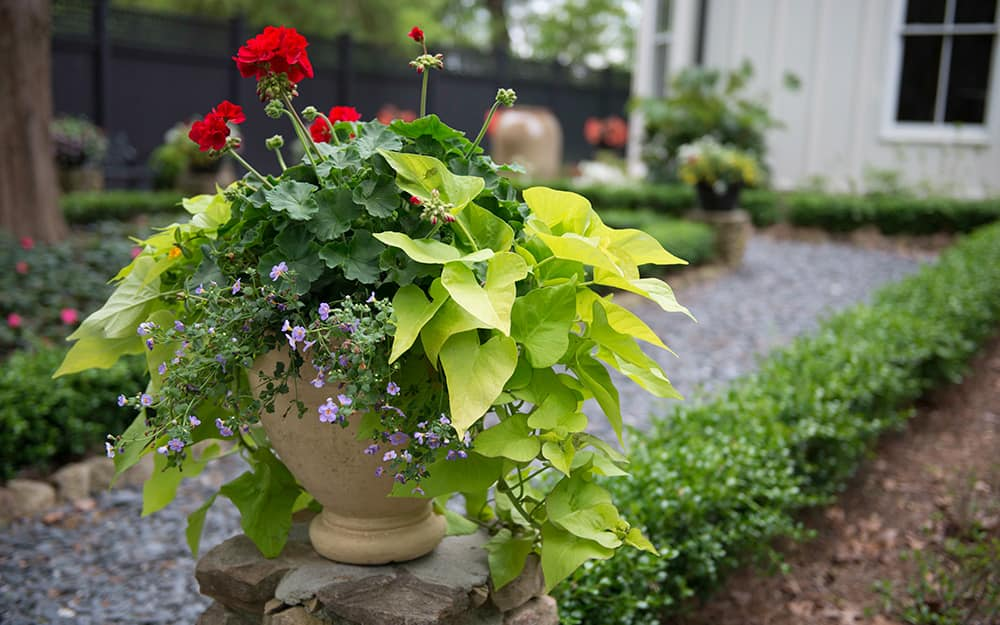 Three types of plants combined in a planter.
