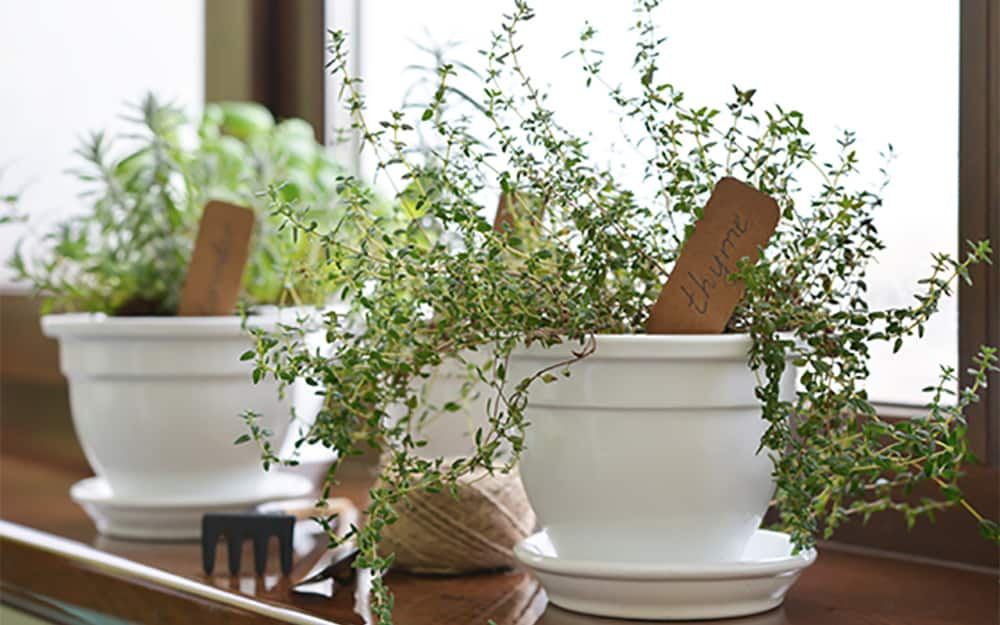 Two white flower pots sown with herbs.