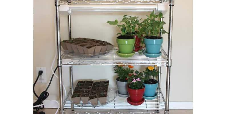 Circulate Air Around the Plants