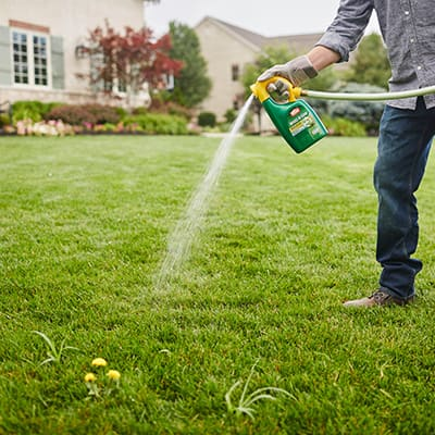 A homeowner spraying weeds in the lawn.