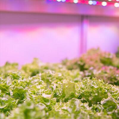 Garden With Grow Lights