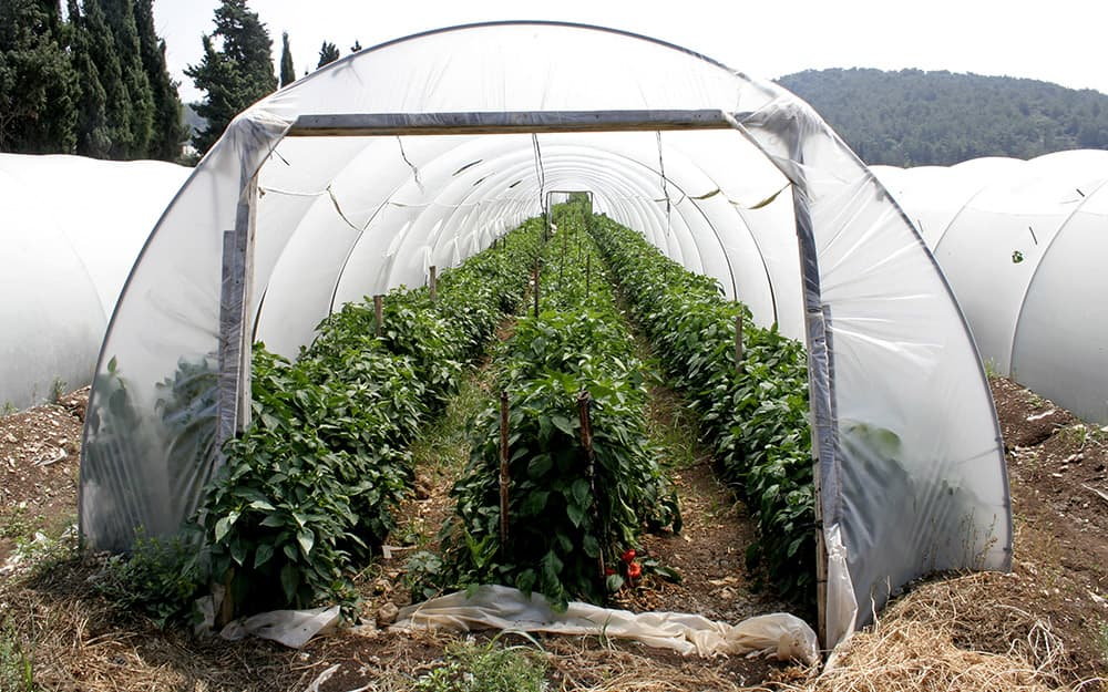 PVC greenhouse with plants