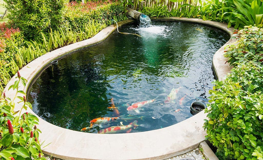 An in-ground fish pond filled with koi.