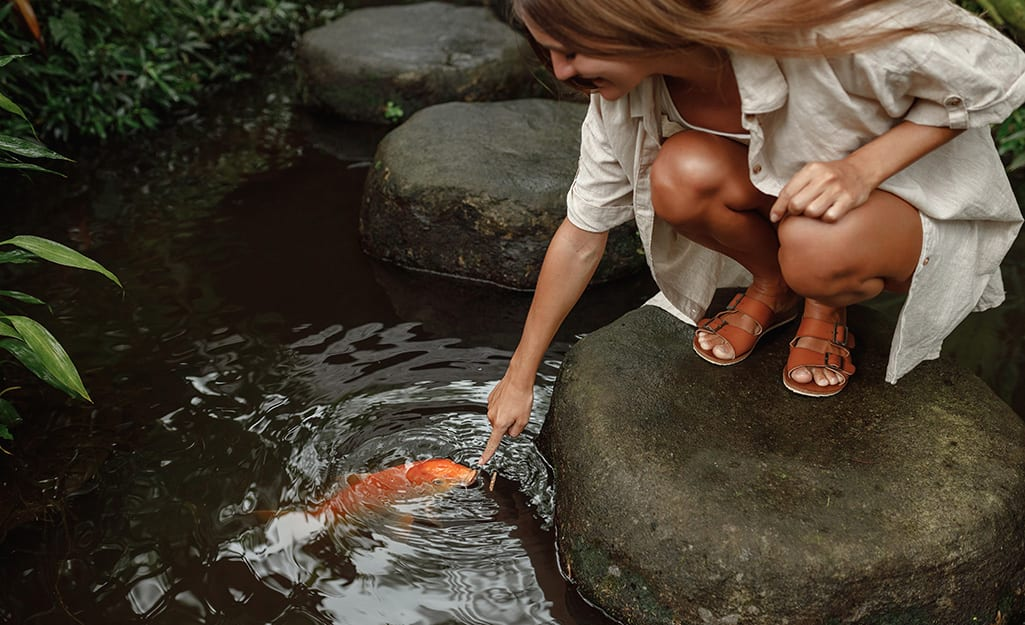 A woman reaches down to admire a large goldfish in a fish pond.