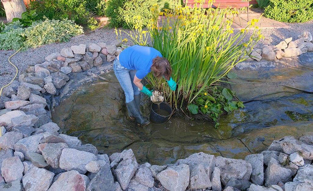 A person planting tall green pond plants in a large in-ground pond.