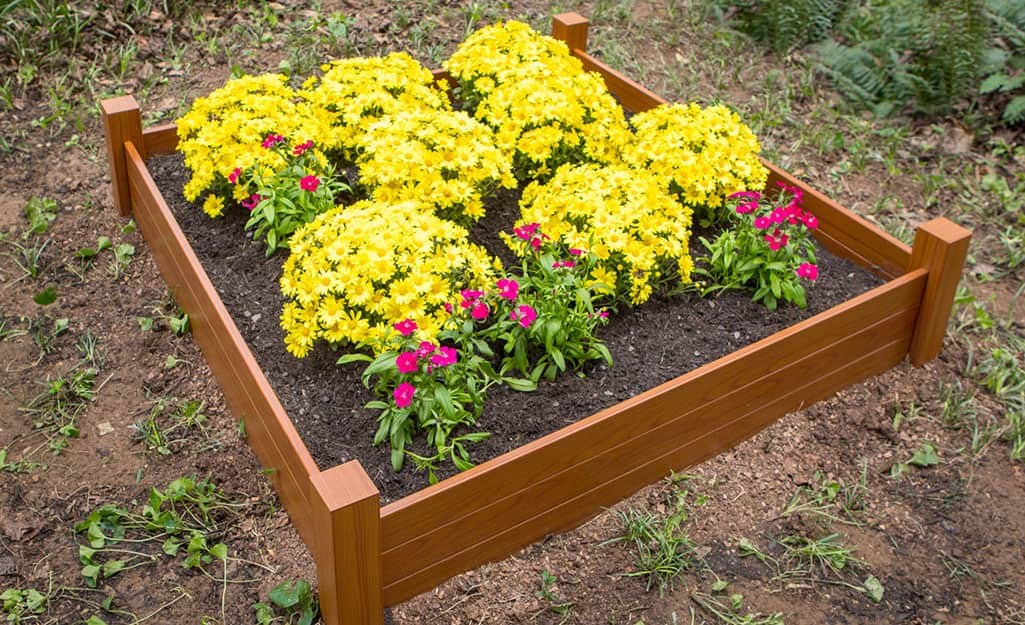 Plants with yellow flowers in a raised garden bed.