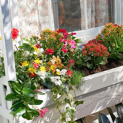 Build your own window box for new way to display an array of plants and flowers
