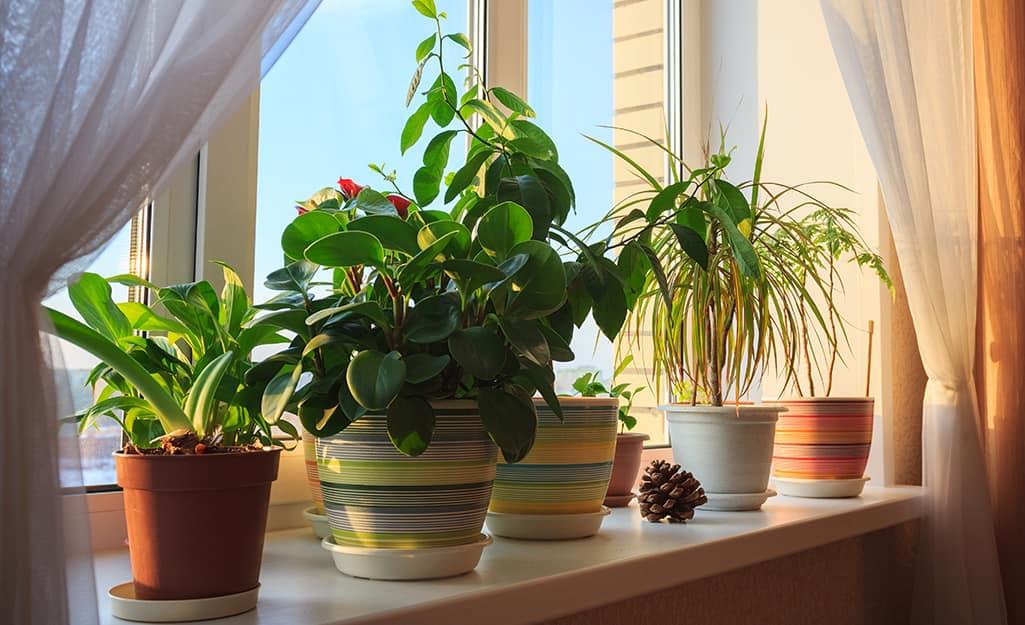 Houseplants in a sunny window