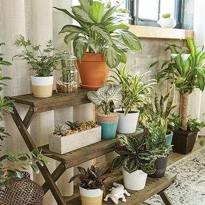 Houseplants stacked on a shelf