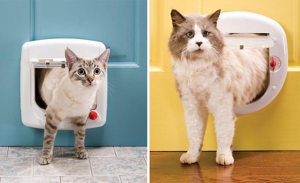 At left, a tiny cat goes out a small cat door. At right, a fluffy cat exits a large cat door.