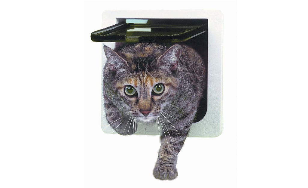 Cat moving through a basic flap cat door.