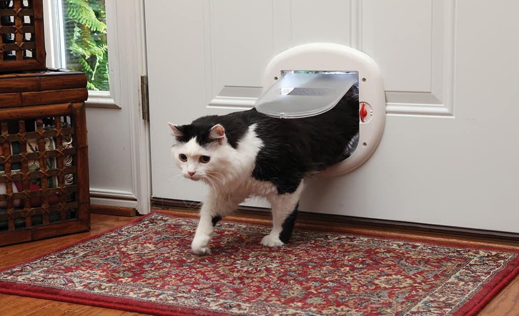 Cat entering a home through the 4-way model of cat door.