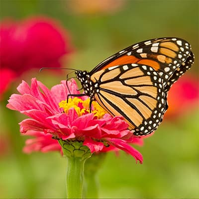 How to Create a Garden Buffet for Pollinators