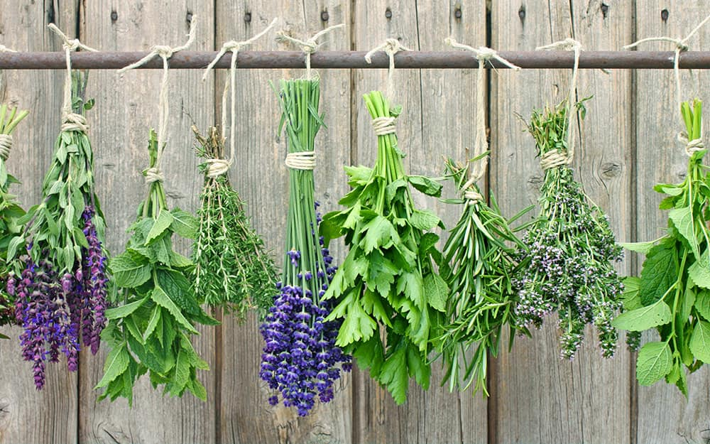Herbs hung upside down to dry.