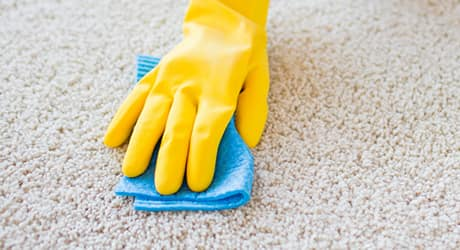 A yellow rubber gloved hand blotting paint stain on white carpet with blue towel.