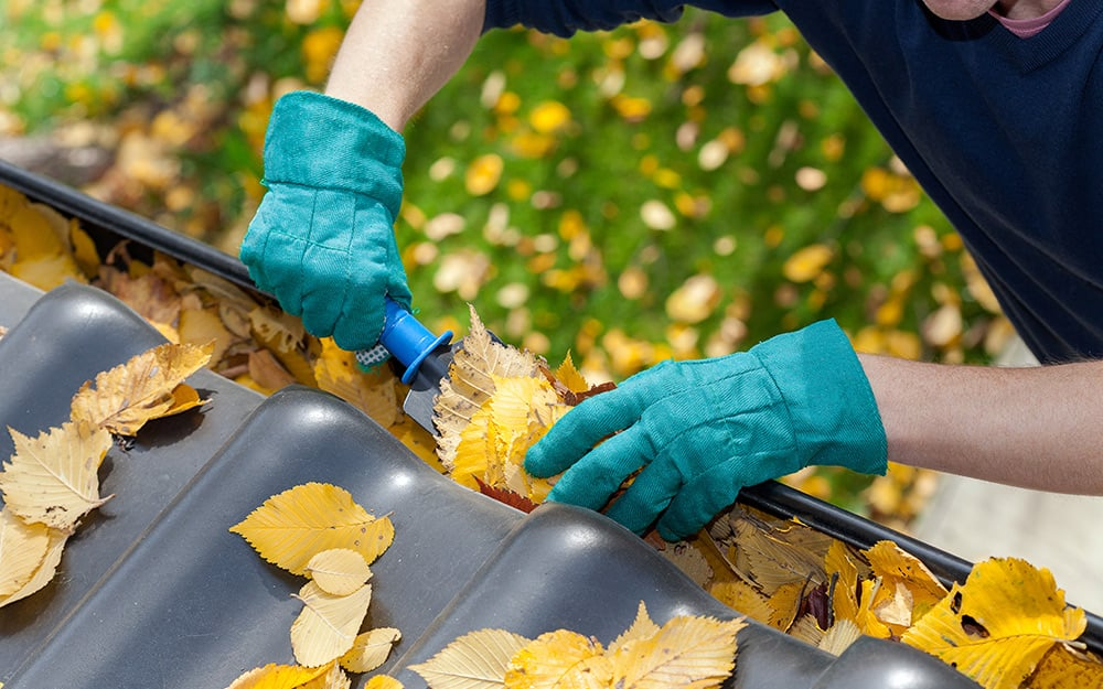 A person cleaning gutters to prevent mold development.