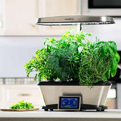 How to Grow a Year-Round Hydroponic Garden