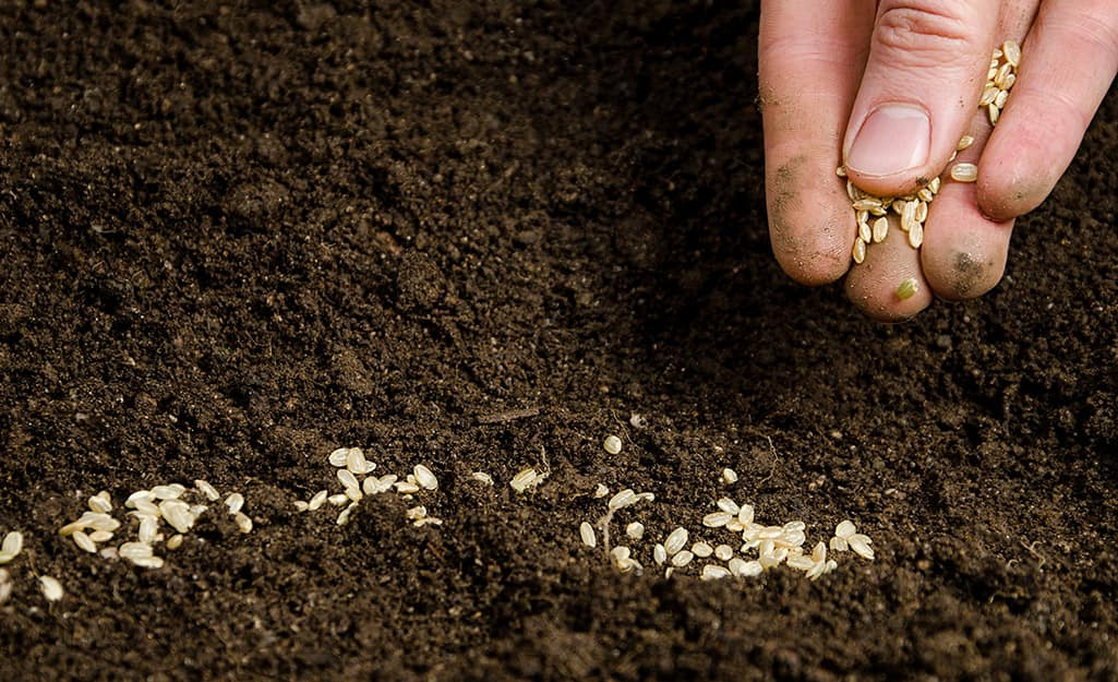 A person sowing seeds in soil.